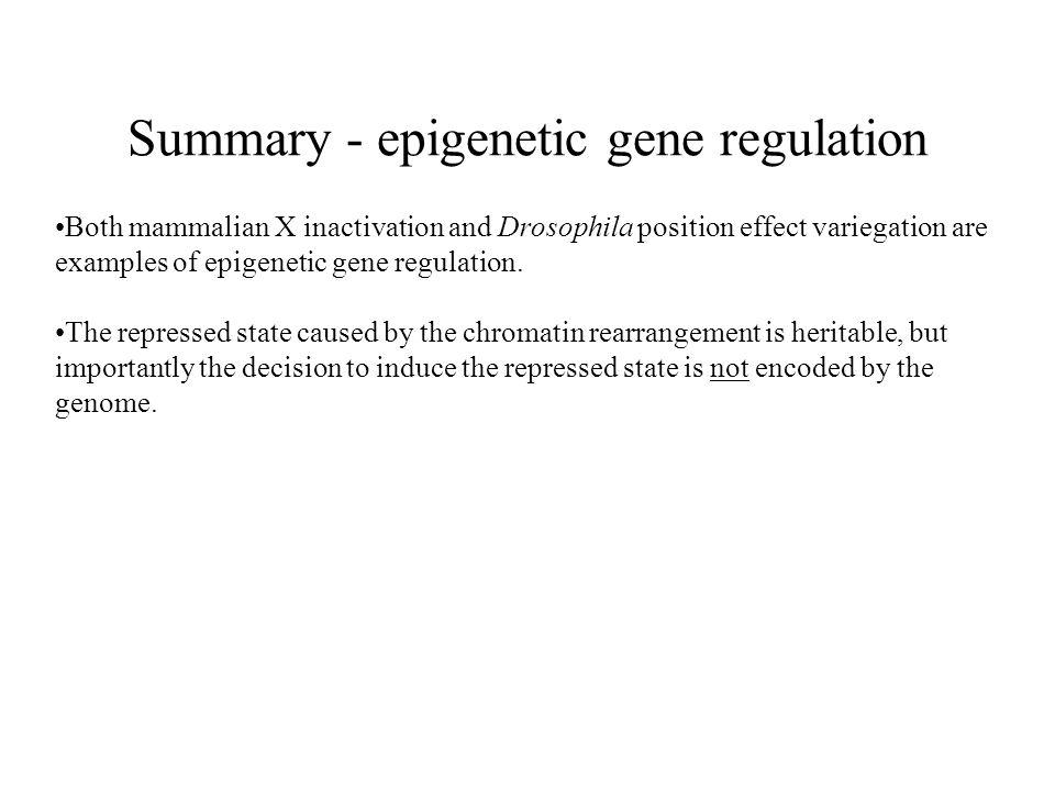 Summary - epigenetic gene regulation
