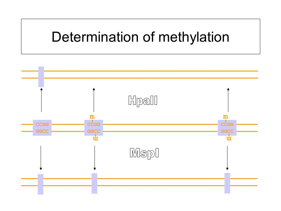 Determination of methylation