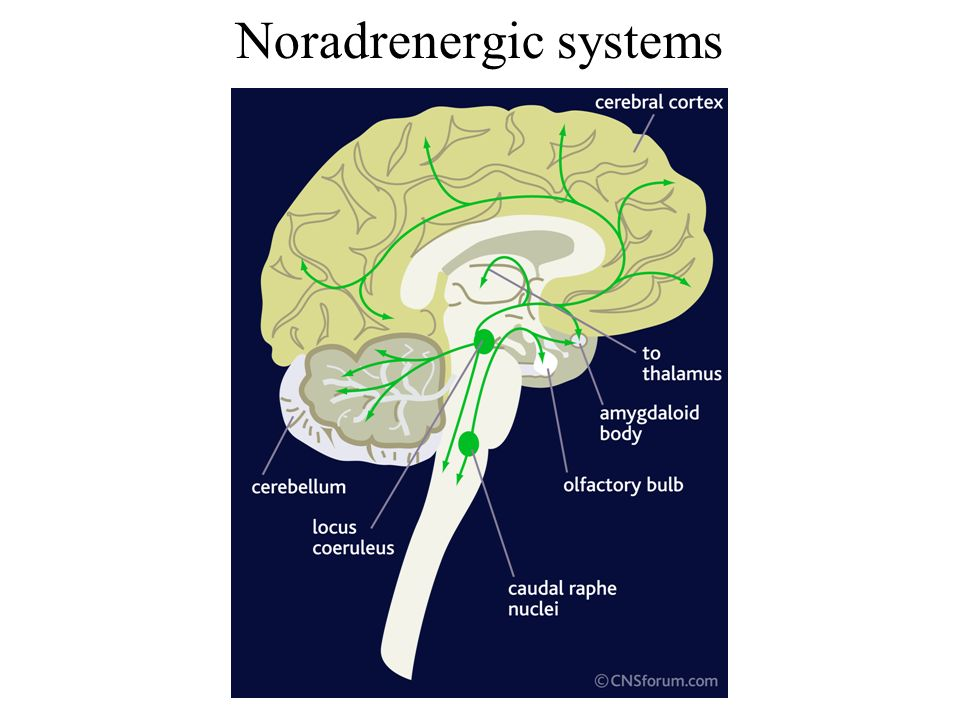 Noradrenergic systems