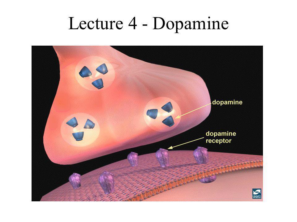 Lecture 4 - Dopamine