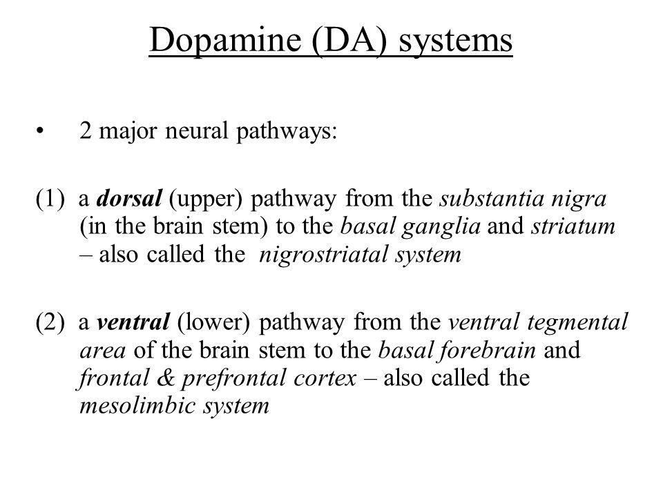 Dopamine (DA) systems 2 major neural pathways: