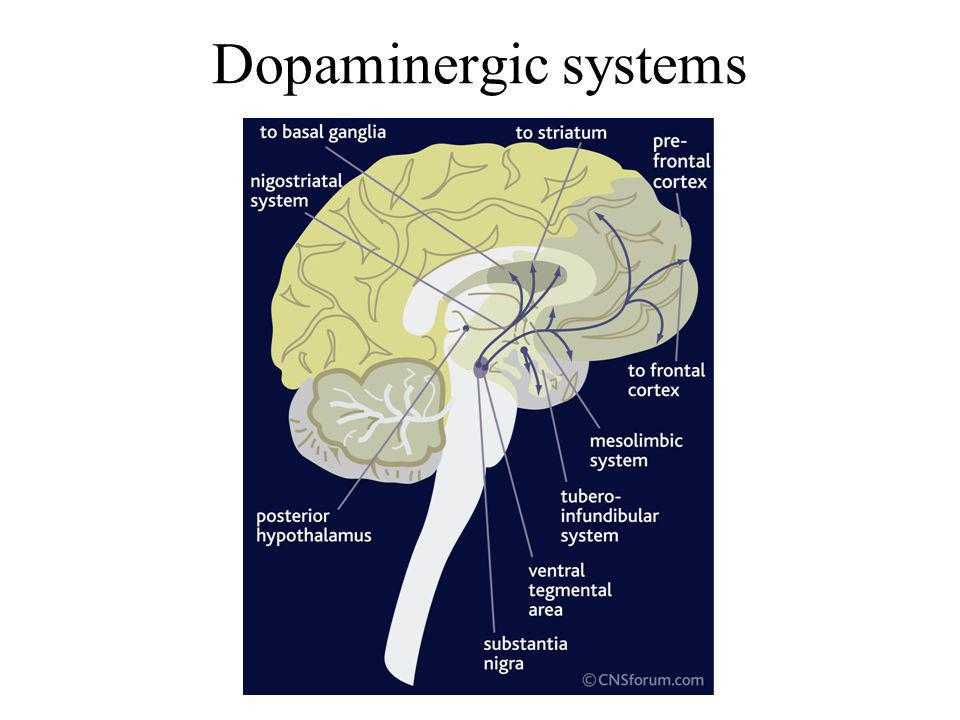 Dopaminergic systems