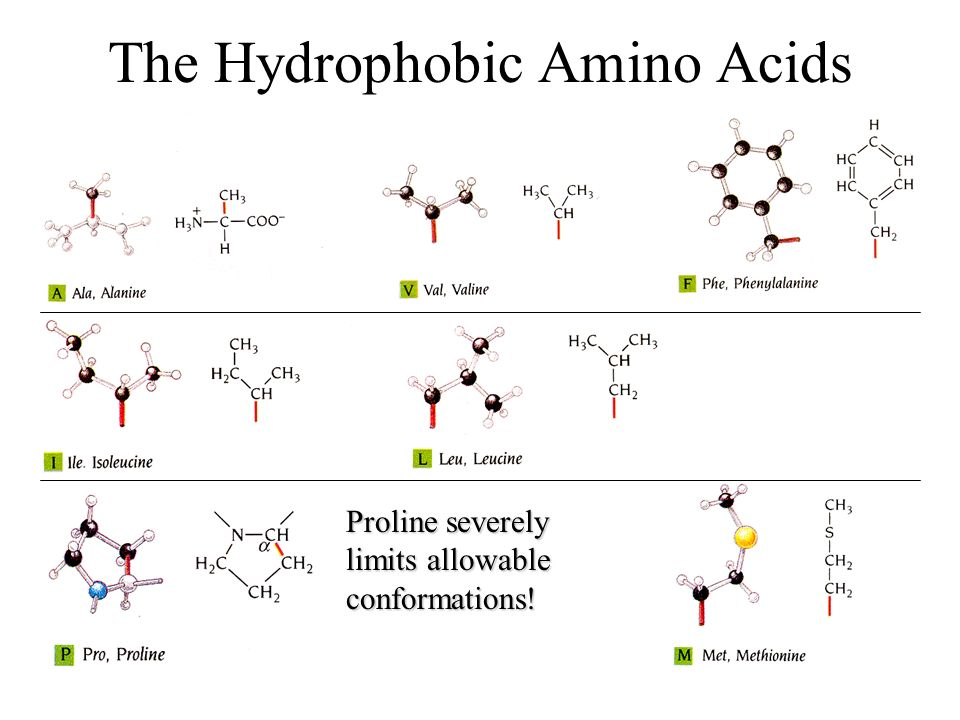 The Hydrophobic Amino Acids