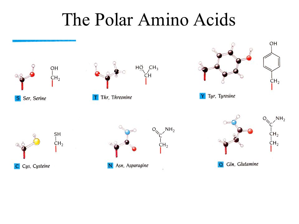 The Polar Amino Acids