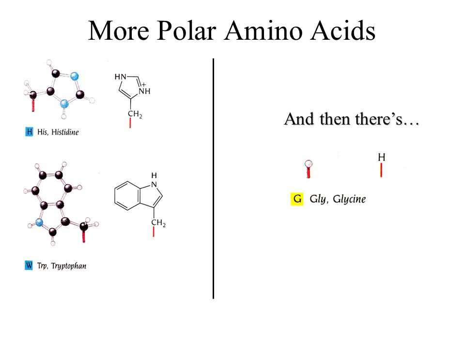 More Polar Amino Acids And then there's…