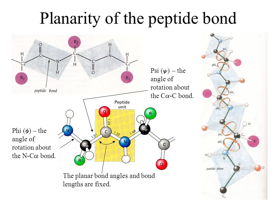 Planarity of the peptide bond