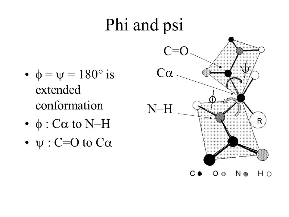 Phi and psi C=O C  =  = 180° is extended conformation  : C to N–H