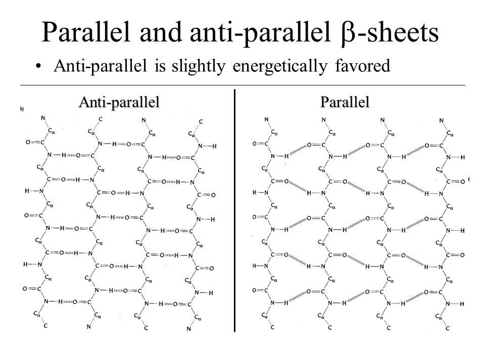 Parallel and anti-parallel -sheets