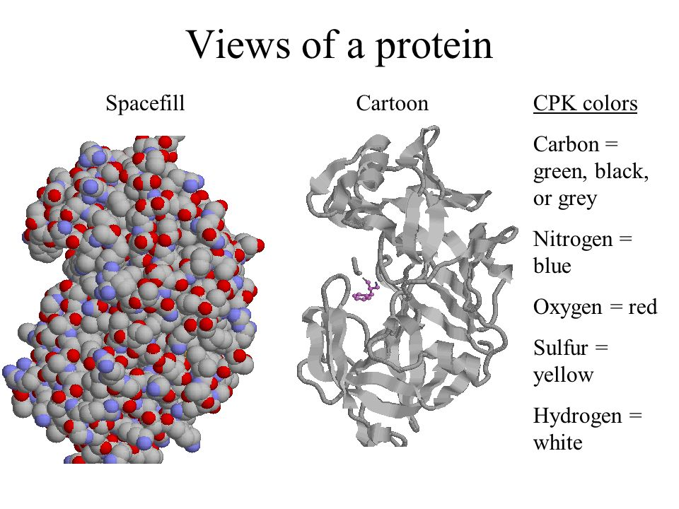 Views of a protein Spacefill Cartoon CPK colors