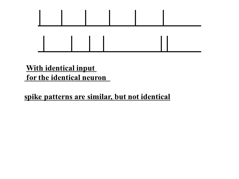 With identical input for the identical neuron spike patterns are similar, but not identical