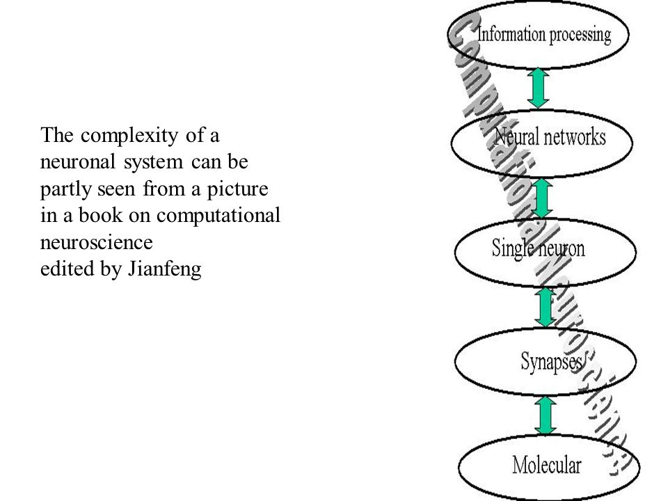 The complexity of a neuronal system can be