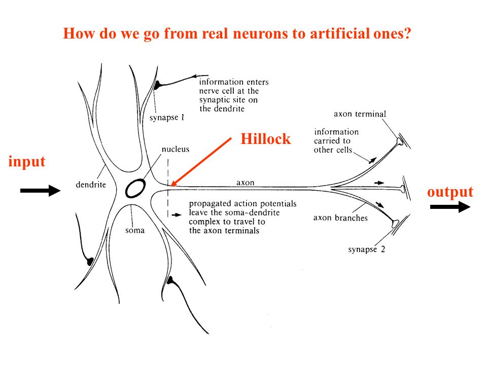 How do we go from real neurons to artificial ones
