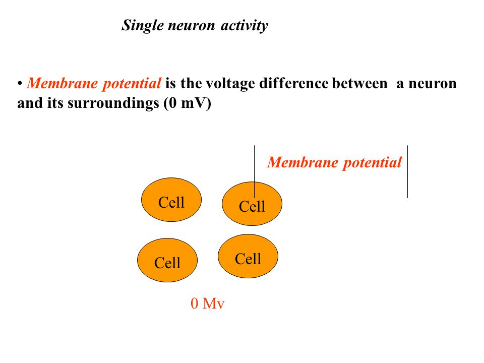 Single neuron activity