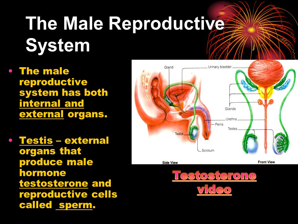Short essay on Human Reproductive System