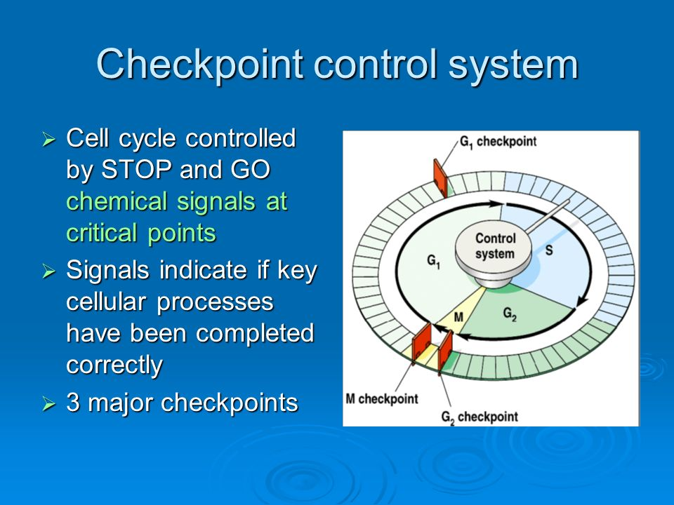 checkpoint signals Read checkpoint controls and  and that the final decision is dependant on the net result of integrating the two sets of signals it is intriguing that.