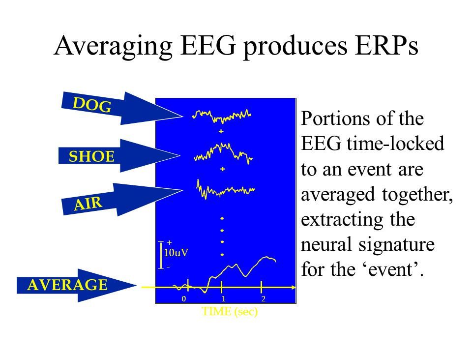 Averaging EEG produces ERPs