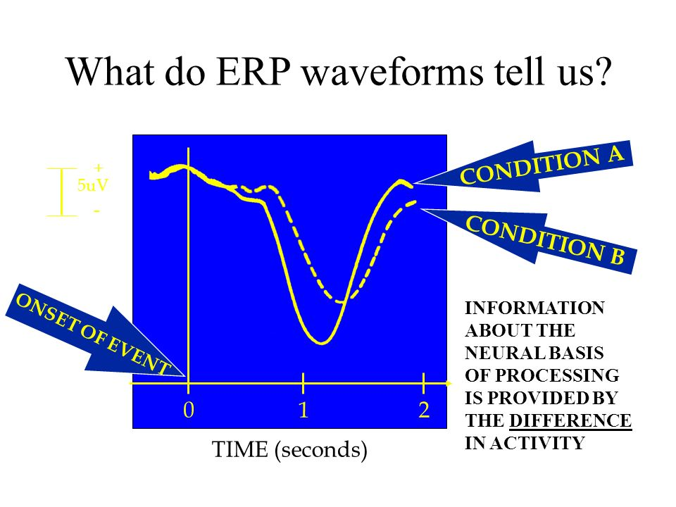 What do ERP waveforms tell us