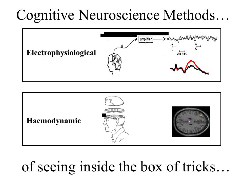 Cognitive Neuroscience Methods…