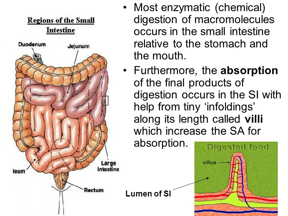 34 Easy Ways To Most absorption occurs in the large intestine.