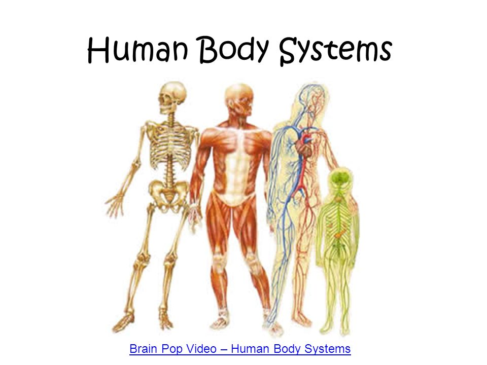 Brain Pop Video Human Body Systems
