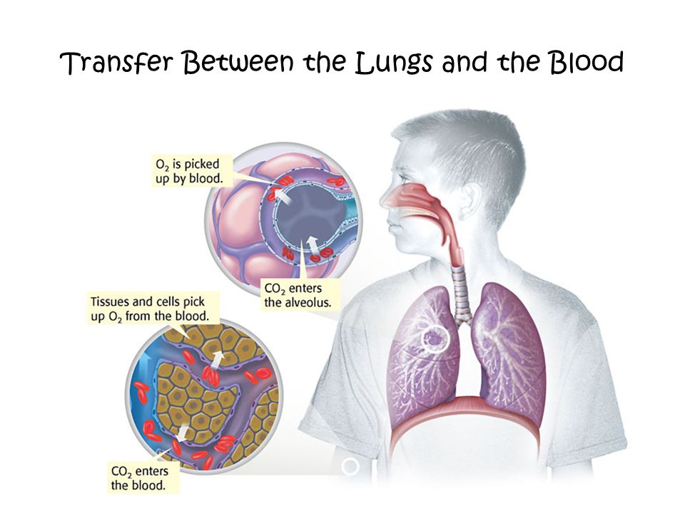 Transfer Between the Lungs and the Blood