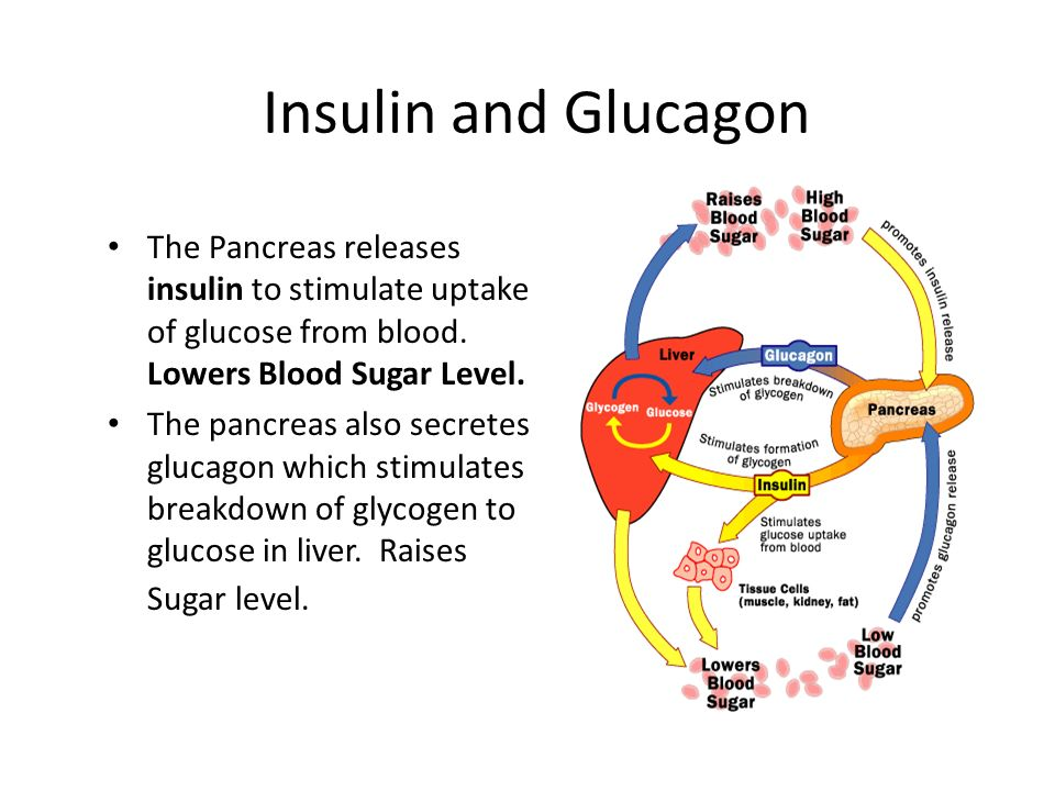 Insulin and Glucagon The Pancreas releases insulin to stimulate uptake of glucose from blood. Lowers Blood Sugar Level.