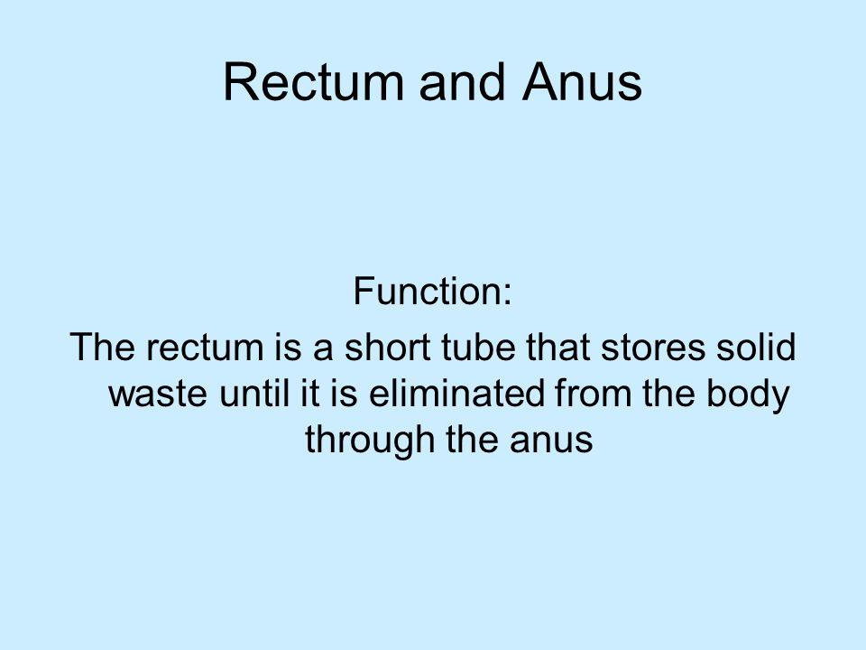 Rectum and Anus Function: The rectum is a short tube that stores solid waste until it is eliminated from the body through the anus