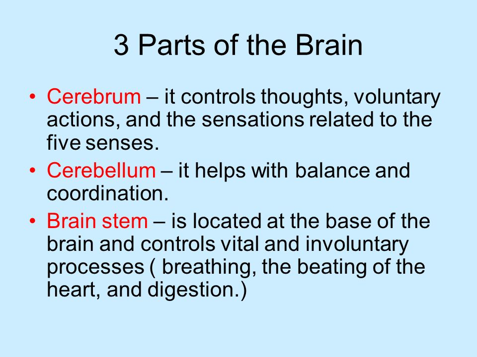 3 Parts of the Brain Cerebrum – it controls thoughts, voluntary actions, and the sensations related to the five senses.