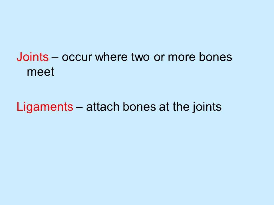 Joints – occur where two or more bones meet Ligaments – attach bones at the joints