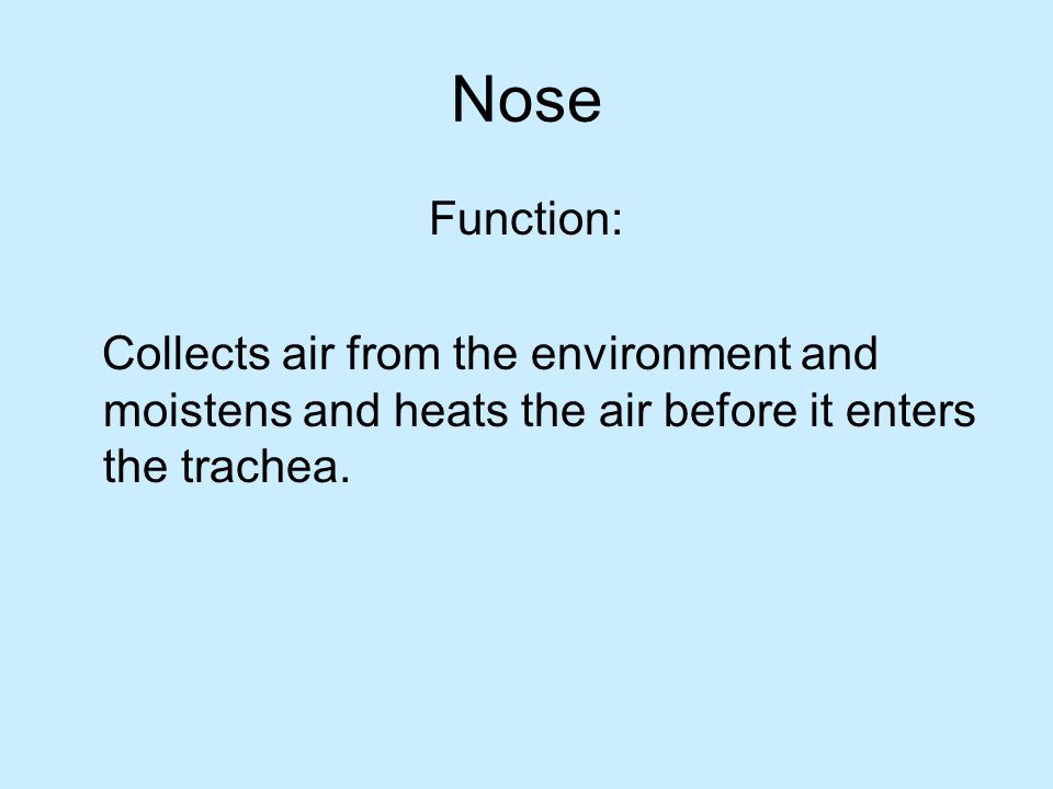 Nose Function: Collects air from the environment and moistens and heats the air before it enters the trachea.