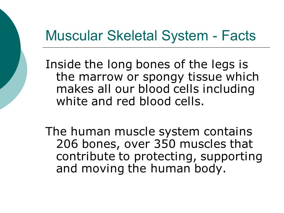skeletal and muscular system facts – lickclick, Muscles