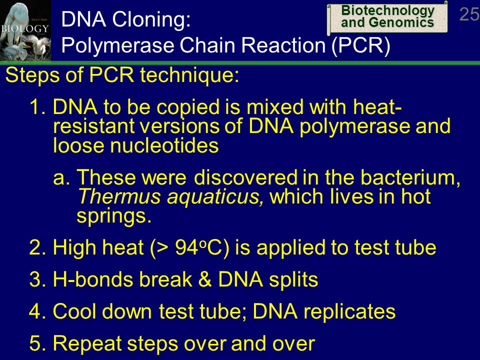 biology dna fingerprinting and polymerase chain reaction Read dna fingerprinting free essay and over 88,000 other research documents dna fingerprinting  biology-dna fingerprinting and polymerase chain reaction in this coursework i will be exploring two issues, my major issue being dna fingerprinting and my minor issue is pcr (polymerase chain reaction) dna 1,687 words | 7.