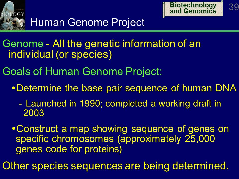 the goals of the human genome project What is the human genome project many lofty goals have been set in order to give the public a viewing of the possibilities that seem to be almost endless serious study is now under way on the ethical, legal, and social issues (elsi) related to increasingly rapid progress in.