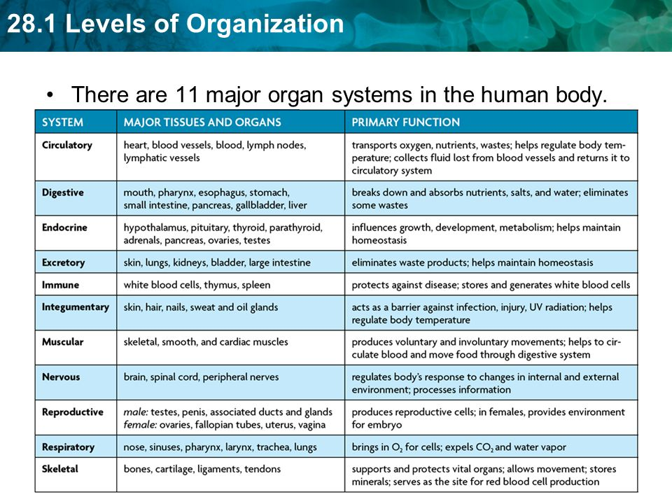 seven organizational approaches of the human body 7 origanizational approaches paper each are important to understand the complex systems and workings of the human body, the seven organizational approaches.