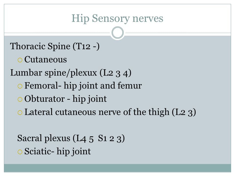 Hip Sensory nerves Thoracic Spine (T12 -) Cutaneous