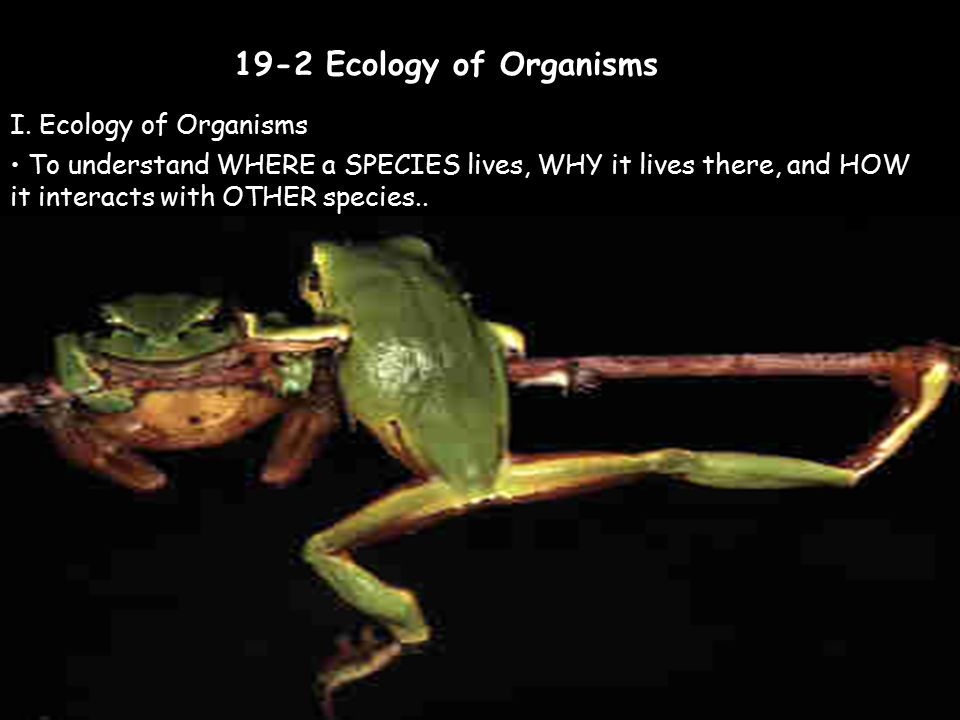 19-2 Ecology of Organisms I. Ecology of Organisms