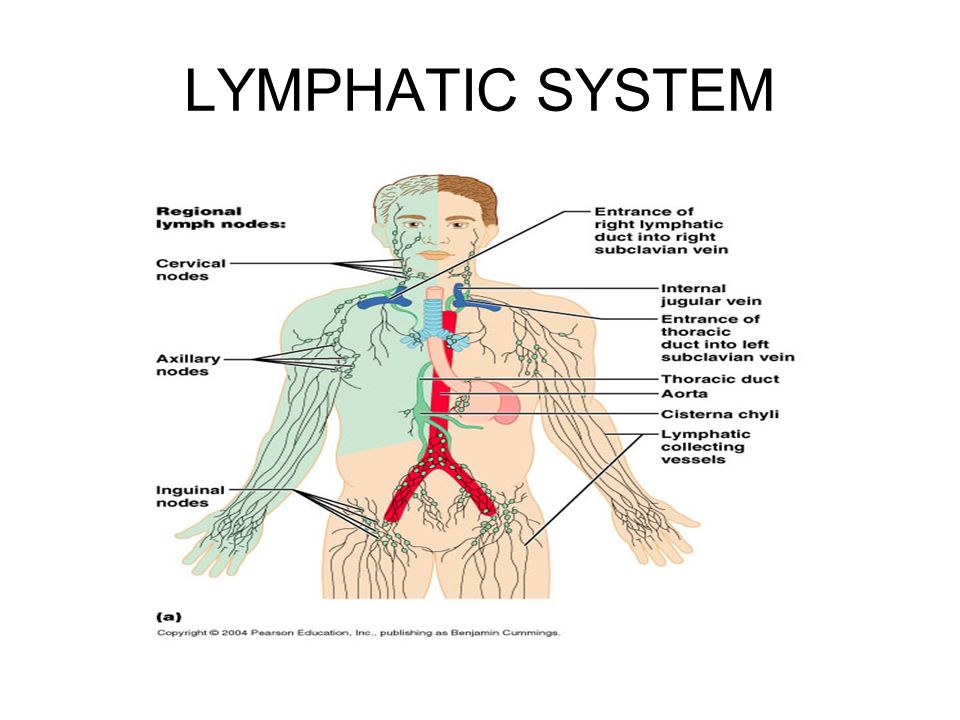 THE LYMPHATIC SYSTEM Consists of two semi-independent parts: - ppt ...