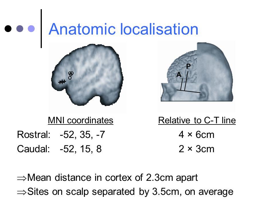 Anatomic localisation