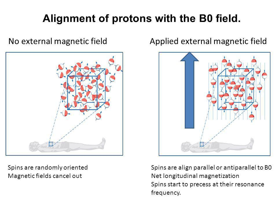 Alignment of protons with the B0 field.