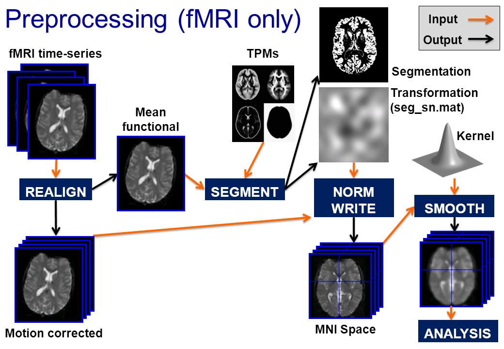 Preprocessing (fMRI only)