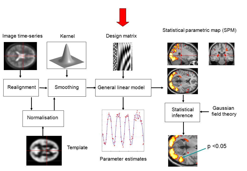 p <0.05 Statistical parametric map (SPM) Image time-series Kernel