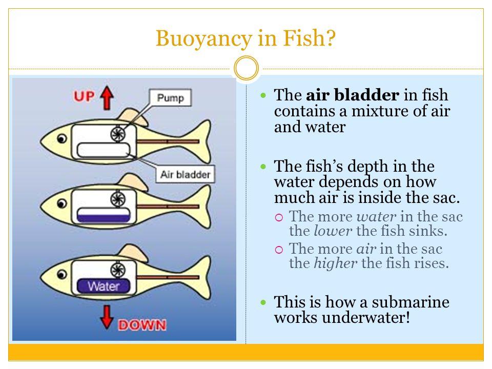 100 buoyancy worksheets grade 2 buoyancy worksheet grade 3 worksheets aquatechnics biz. Black Bedroom Furniture Sets. Home Design Ideas