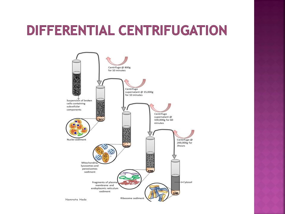 Cell Fractionation And Centrifugation Ppt Video Online