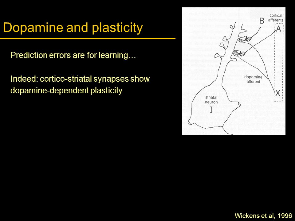 Dopamine and plasticity