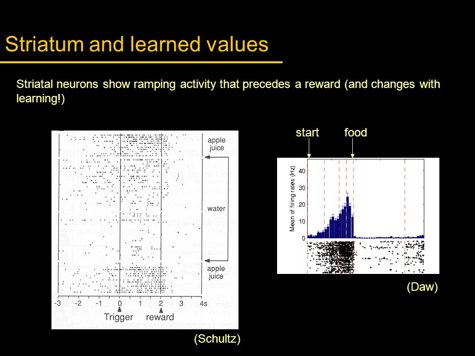 Striatum and learned values