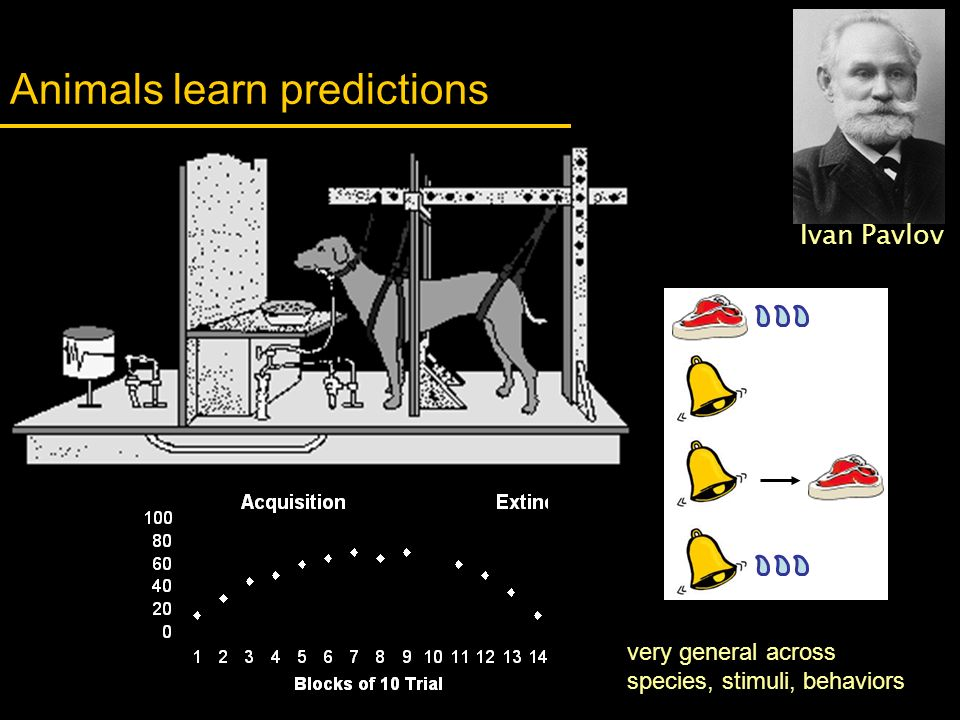 Animals learn predictions
