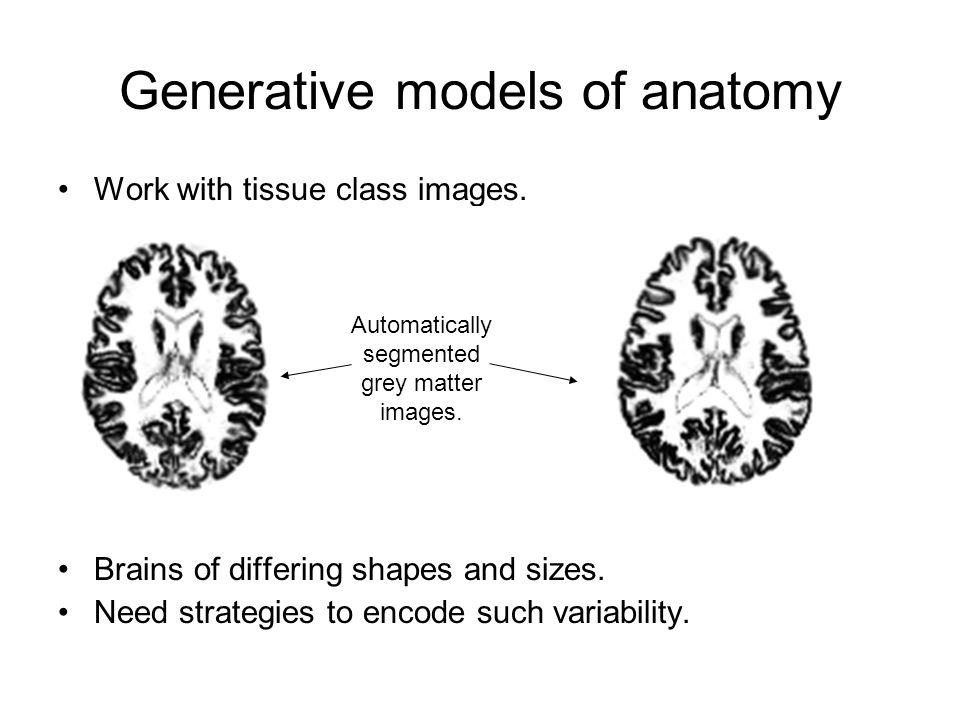 Generative models of anatomy
