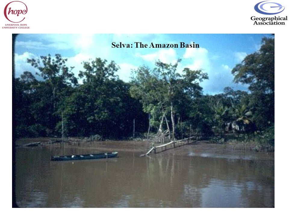 Selva: The Amazon Basin