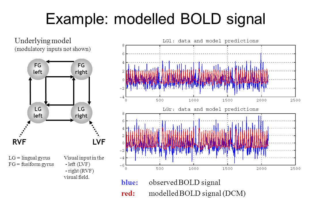 Example: modelled BOLD signal