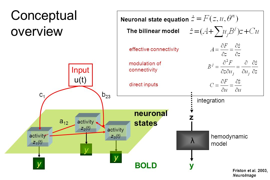Neuronal state equation